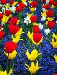Primavera_2015_web
